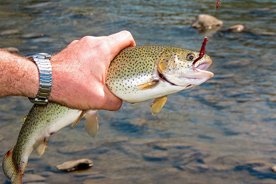 Go Trout fishing the Smoky Mountains